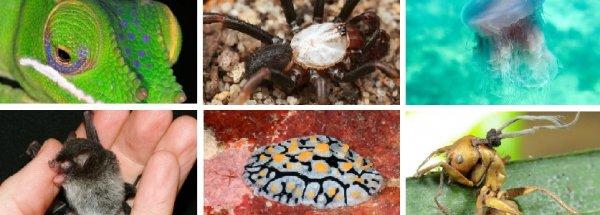 Las 10 especies más raras