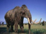 Recreación artística de un mamut.