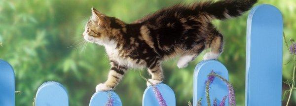 Las 7 vidas del gato