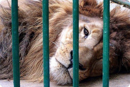 Los zoológicos en el punto de mira