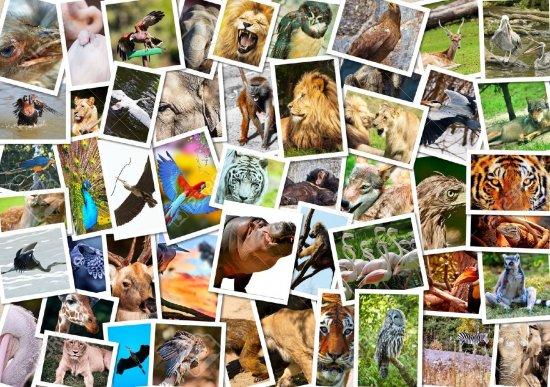 ¿Sabías tanto sobre los animales como creías?