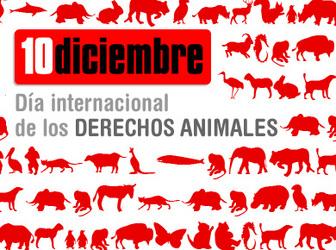 10 D: Día Internacional de los Derechos de los Animales.