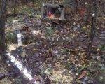 Nacimiento en el bosque de Valorio. Foto de Internet