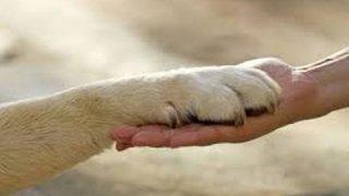 Derechos de los animales.
